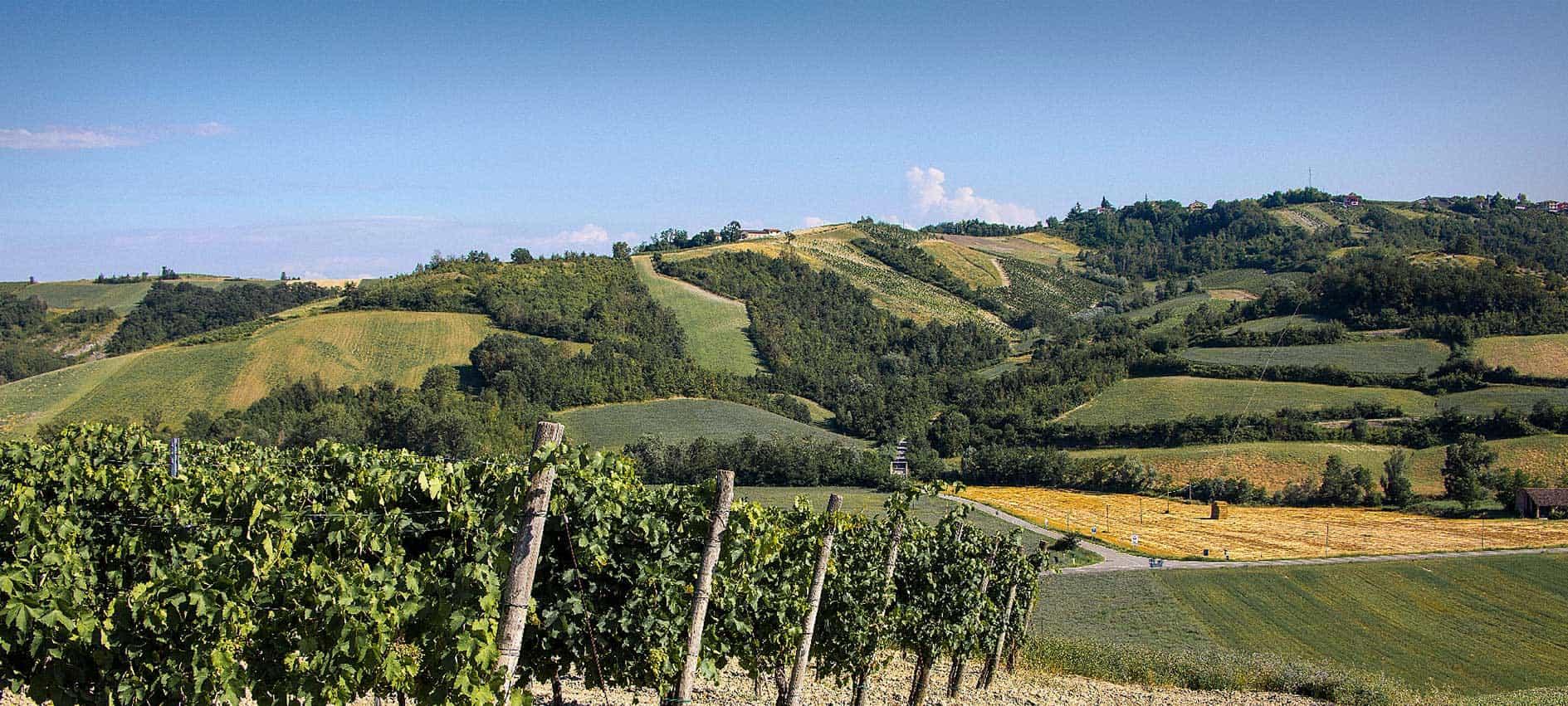 azienda-vitivinicola-la-camina-bacedasco
